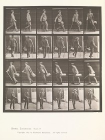 Animal locomotion (Eadweard Muybridge, 1880s) - www.metmuseum.org